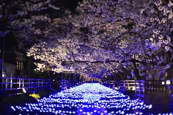 温泉通り夜桜.JPG